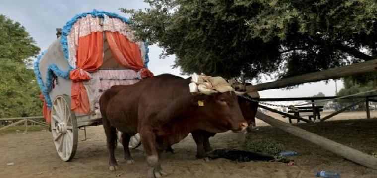 Preparativos para la vuelta de las hermandades - J.M.SERRANO