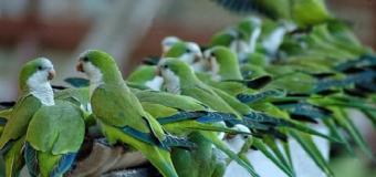 Polémica en Sevilla por los nidos anticotorras