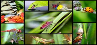 """Corredor Verde del Guadiamar """"Insectos"""""""