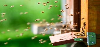 Los plaguicidas merman las funciones cerebrales de las abejas