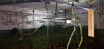 AZNALCÓLLAR – Detenido un vecino tras desmantelar la Policía dos plantaciones de marihuana
