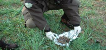 AZNALCOLLAR – Aparecen perros muertos por cebos envenenados