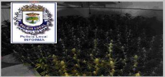 Detenido en Huévar del Aljarafe el responsable de una plantación indoor con 850 plantas de marihuana
