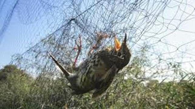 pajaro-victima-caza-redes_EDIIMA20191217_0713_5
