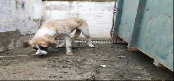 HUÉVAR – Los bomberos rescatan a un perro atrapado en un aljibe de Guadaloliva