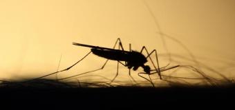 Prepárate porque nos llega un verano con más mosquitos, cucarachas, garrapatas y mosca negra