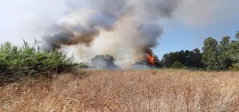 El Infoca trabaja en un incendio forestal en el Corredor Verde del Guadiamar entre Sanlúcar La Mayor y Huévar