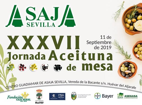 Proyeccion-Aceituna_mesa-2019-V2