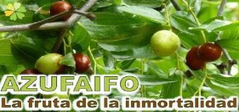 El azufaifo, el árbol de la inmortalidad