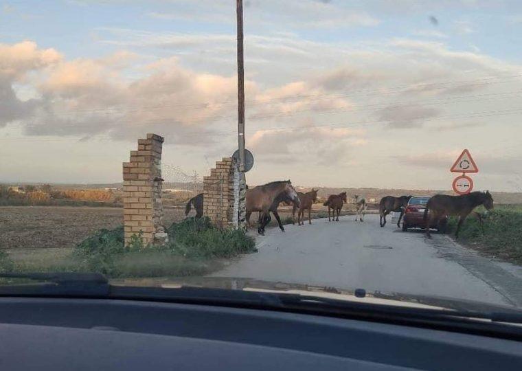 Los caballos sueltos a las puertas de la Huévar