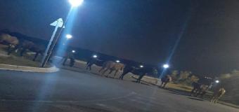 El Corredor Verde del Guadiamar, un paraíso para los caballos, un problema para conductores